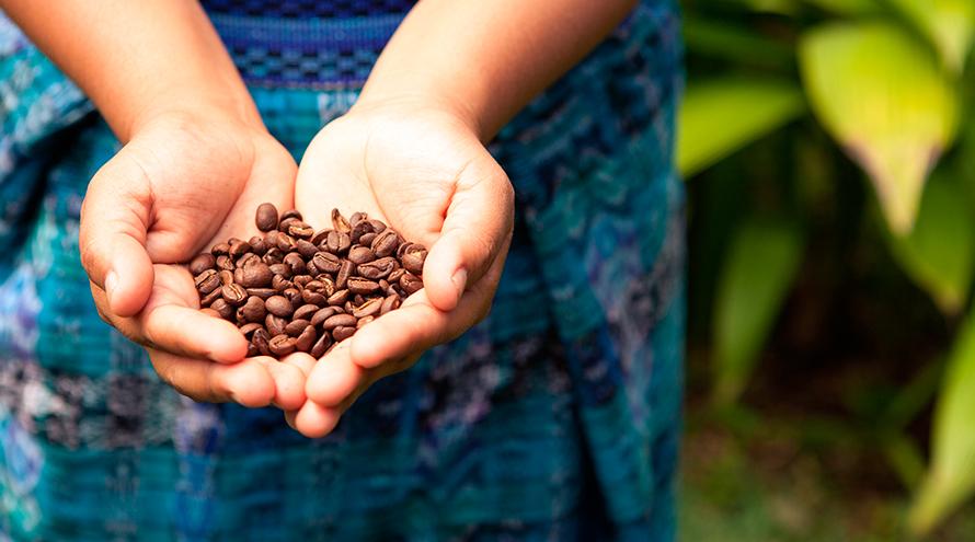 café, preço do café, preço do cafe, cafe melitta, máquinas de café, cápsulas de café, o café, 3 coraçoes, cafe 3 coracoes, cafe arabe, café pilão, preço do cafe hoje, café arábica, café em grãos, grão de café, preco cafe, cafe batido, industria de alimentos, empresas do setor café, empresas do segmento café, setor café, segmento café, economia, macroeconomia, cafeeiro, setor cafeeiro, segmento cafeeiro